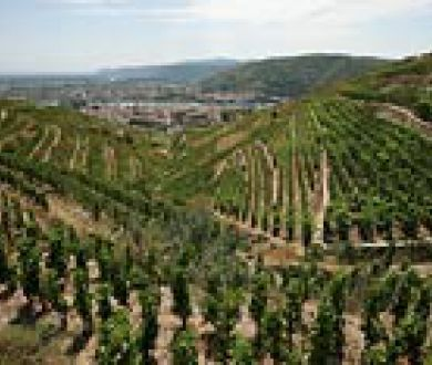 Mountain viticulture