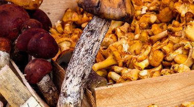 Culinary Treasures of the French Mountains
