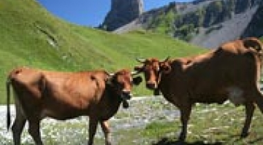 "The ""terroir"" in summer: cheese-making"